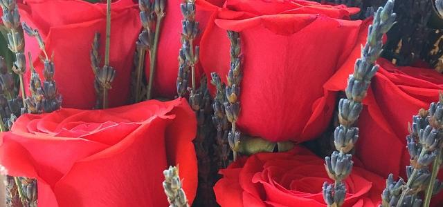 Roses Have Incredible Life-Balancing Powers!